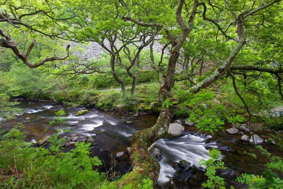 Spring brings a lush green canopy to Watersmeet in Exmoor National Park, Devon, England. © Adam Burton