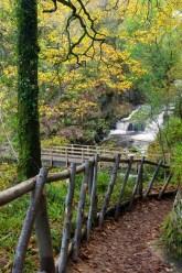 Footpath leading down through autumnal trees to Hoar Oak Water at Watersmeet, Exmoor National Park, Devon, England. © Adam Burton