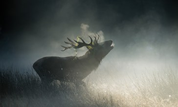 Big old stag silhouetted in the misty morning light at Richmond park. Nikon D4, 500mm, ISO 250, 1/1000 at f/6.3. © Andrew Marshall