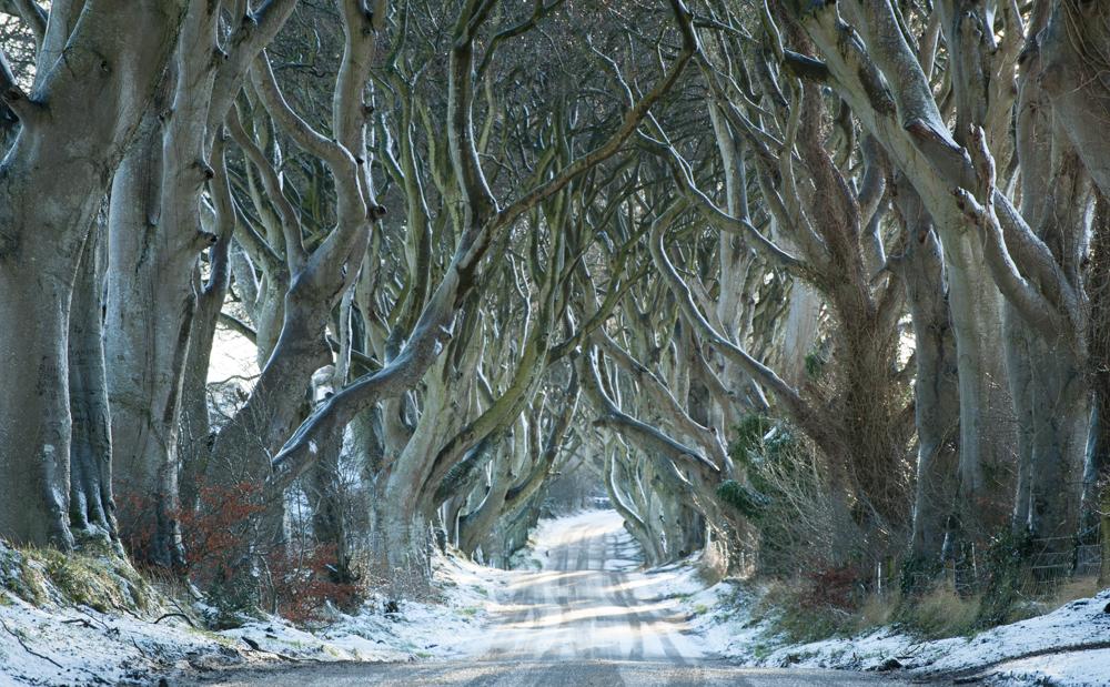 Dark Hedges, Country Antrim, Northern Ireland. Nikon D810, 70 - 300 Nikkor at 185 mm, 1/30s at f/13. Tripod. January. © Sarah Howard
