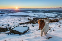 Foel Eryr Horse. Canon 5D Mark III, Canon EF 24-70mm at 24mm, ISO 400, 1/80s at f/13 . ND Grads. February © Drew Buckley