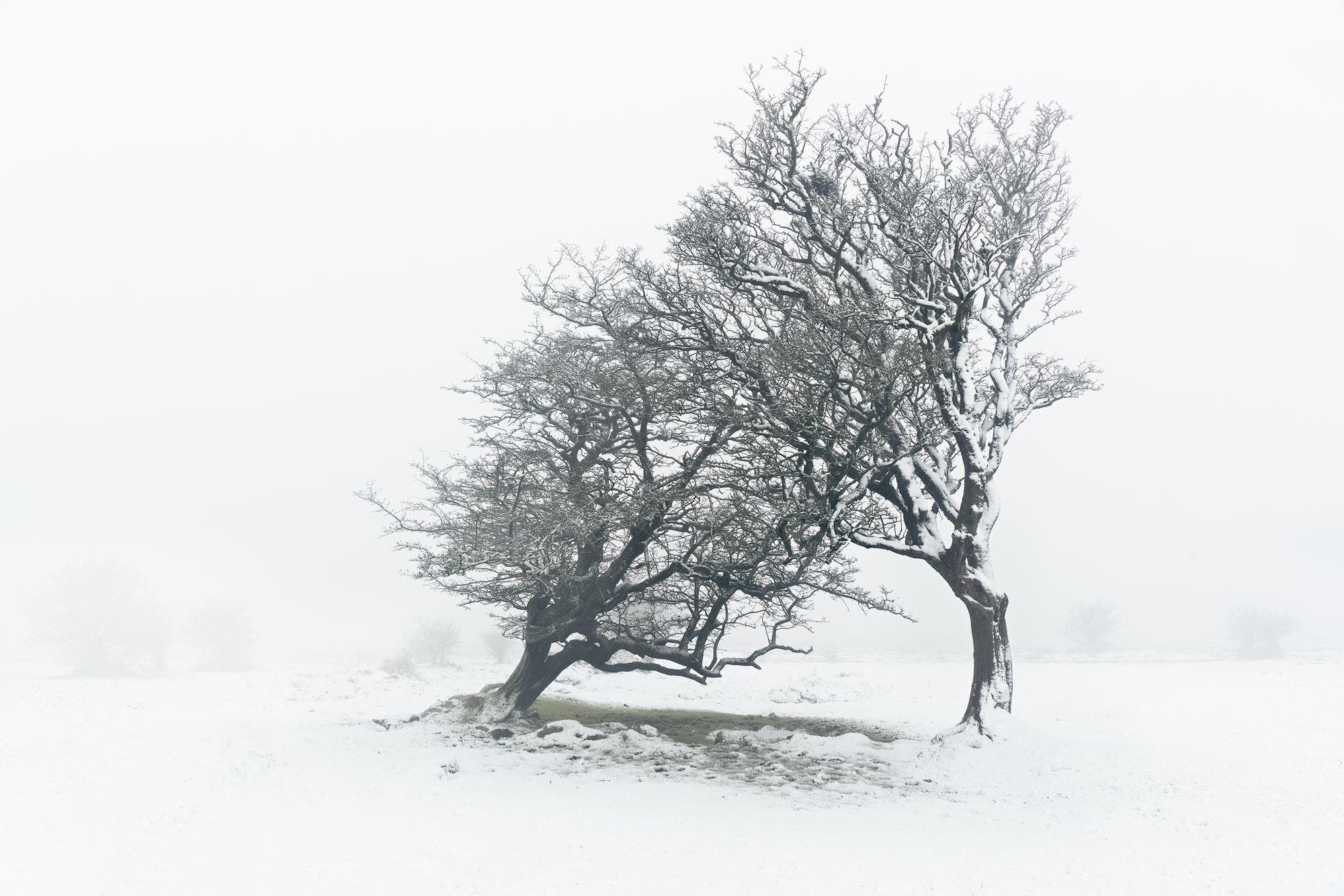 Raw Support, East Dartmoor, February. Sony A7R MK II, Canon EF 24-70 f/4 at 27mm, ISO100, 0.4s at f/11, Tripod. February. © Richard Fox.