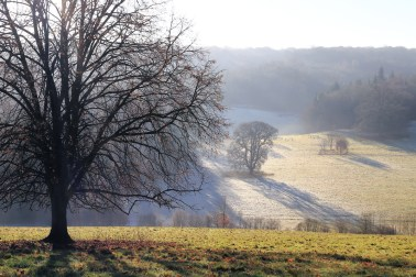 Trees in mist at Polesden Lacey. Canon 6D, Canon EF 24-105mm f/4 at 58mm, ISO 320, 1/320s at f/14. December. © Beata Moore
