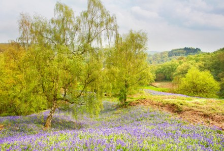 Coumbs Wood in May. © Chris Gilbert