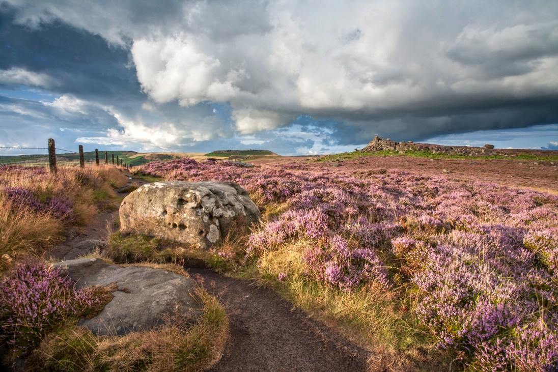 Over Owler Tor at Surprise View and the August display of heather. © Chris Gilbert.