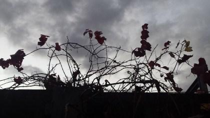 Dark and Gloomy Day // fotwaudio.com