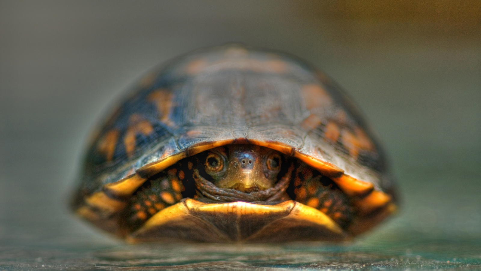 Photo of Baby Turtle by FotoDawg Wikimedia CC BY 2.0