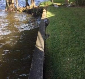 seawall erosion Cape Coral, Florida
