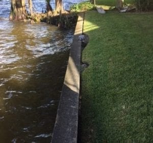 Seawall next to water