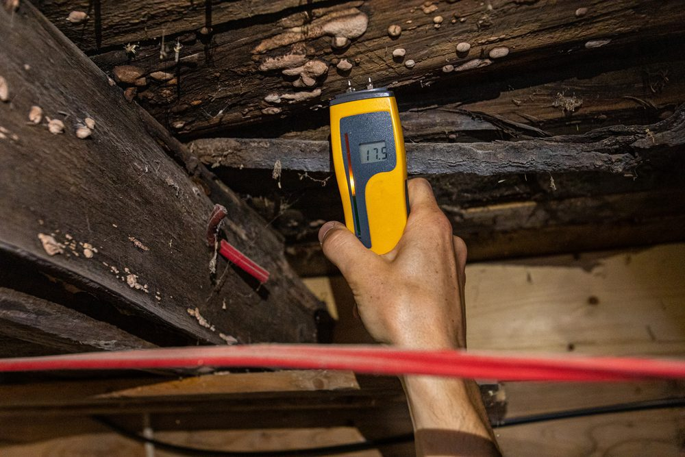 A closeup view of a man using a digital handheld moisture detector showing a moderate level of damp in wood floorboards and joists with white rot fungus.