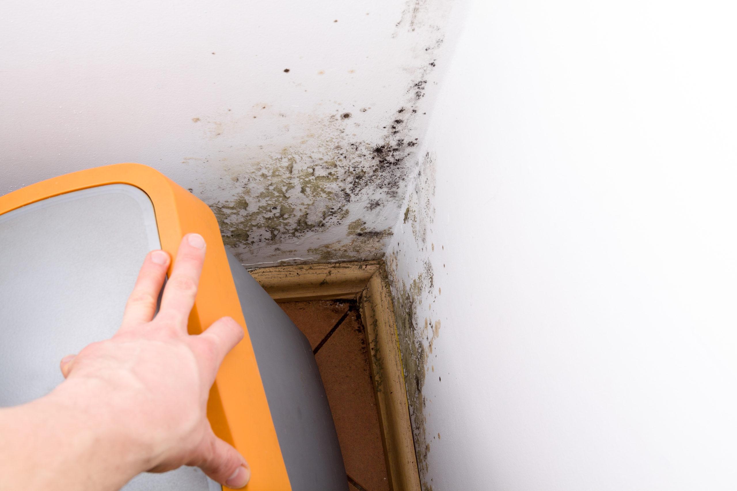 mold on walls of basement