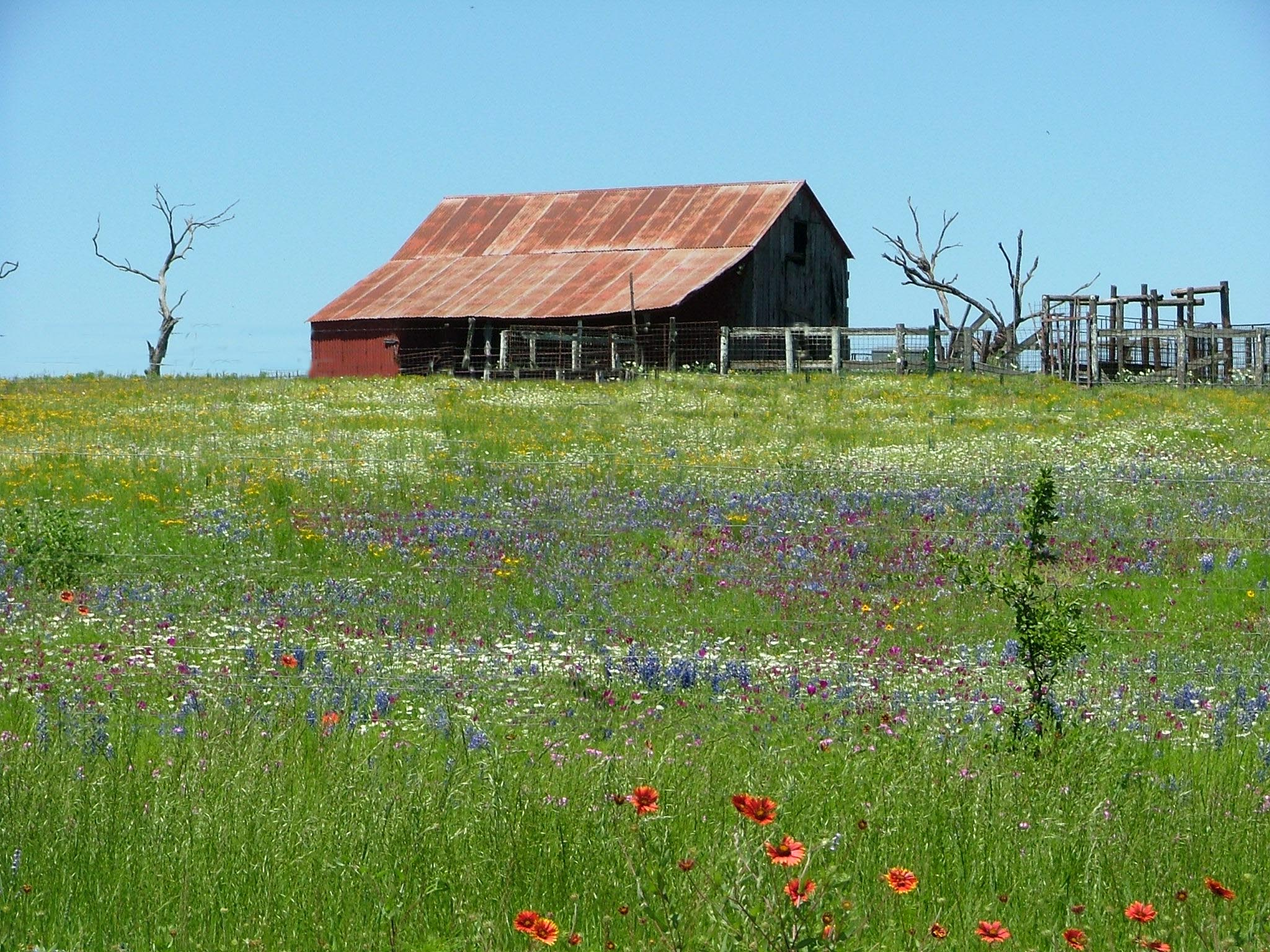 Old Windmill In Fall Grass Wallpaper Texas Hill Country Barn In Wildflowers Rustic Images
