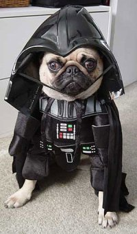 Dog Darth Vader Costume  Funny, Bizarre, Amazing Pictures ...