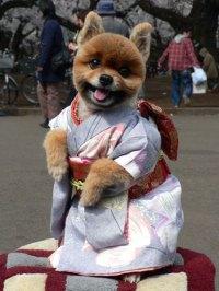 Canine Kimono  Funny, Bizarre, Amazing Pictures & Videos