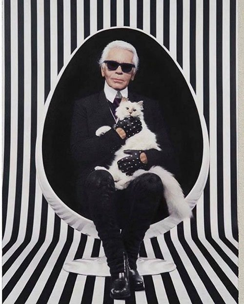 karl lagerfeld white cat in white chair black and white stripe background