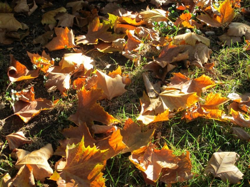 telechargement gratuit de l image dessins peinture nature feuilles tapis de feuilles d automne par lilytana
