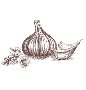 Garlic and parsley hand-drawing. Contains transparent objects. EPS10