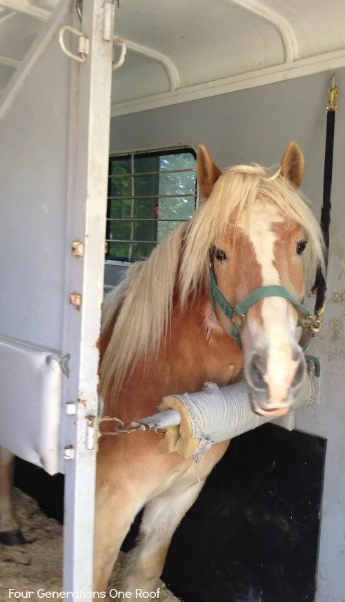 horse colic update at tufts