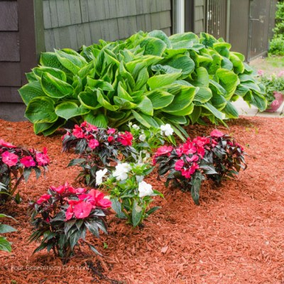 Flower Bed Makeover {Before and After}