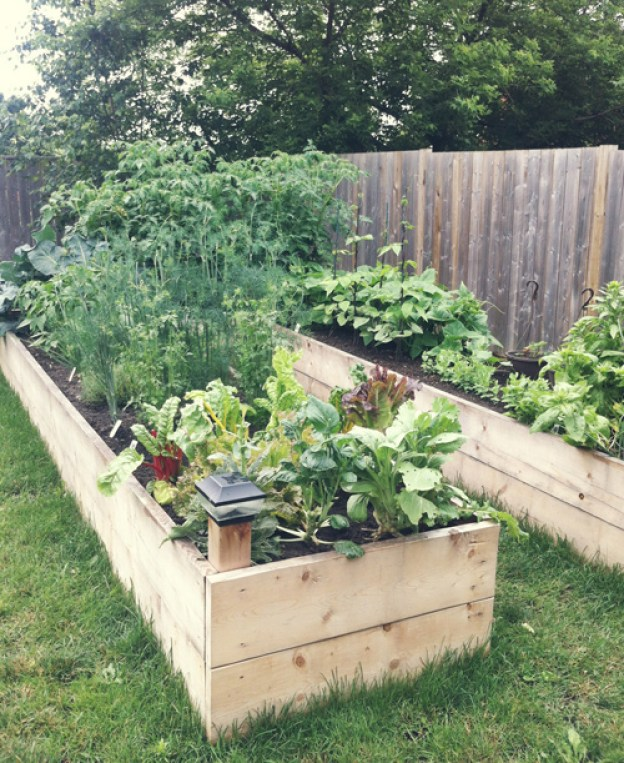 backyard-raised-garden-bed with lettuce and vegetables