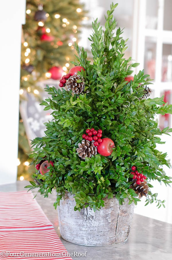 December 5 boxwood tree: family updates: multigenerational living December 2015