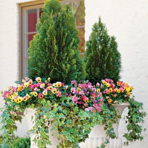 pink and yellow annuals and ivy in a planter