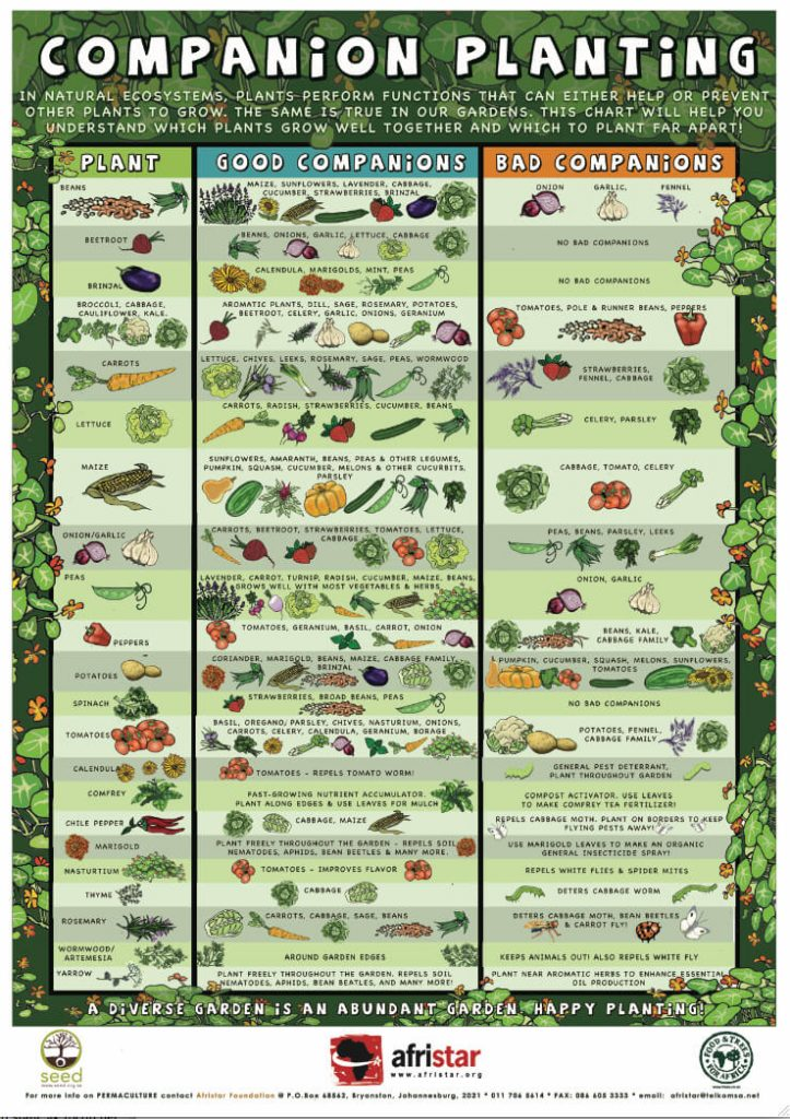 Companion planting for plants