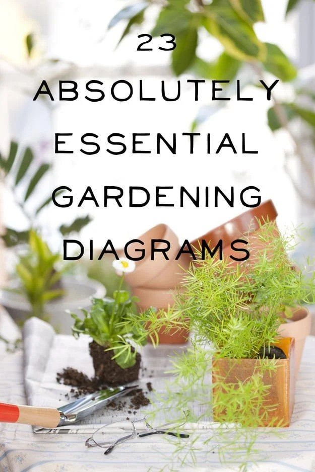gardening layouts for annual plants
