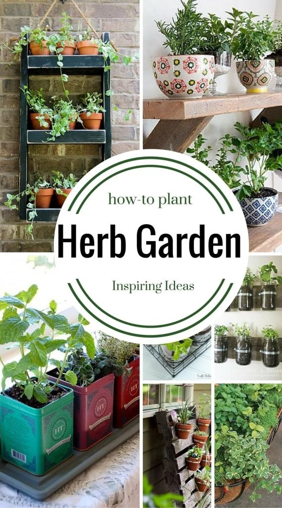 How to Plant an Herb Garden | Ideas and Inspiration