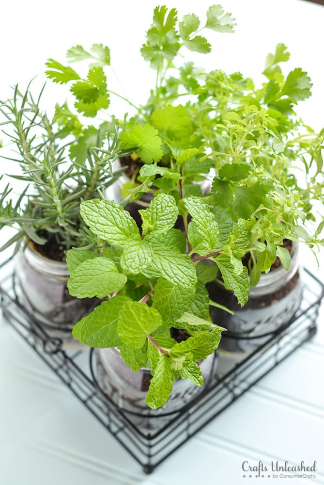 Mason Jar Herb Garden with fresh mint