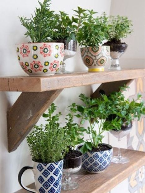 Tea Cup Herb Garden on wood shelf