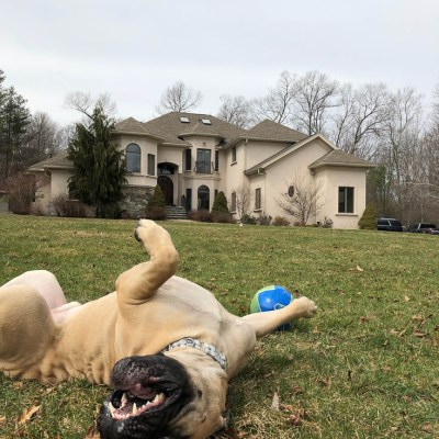 Doggie Dog Help and poopy socks! – The Murph Man