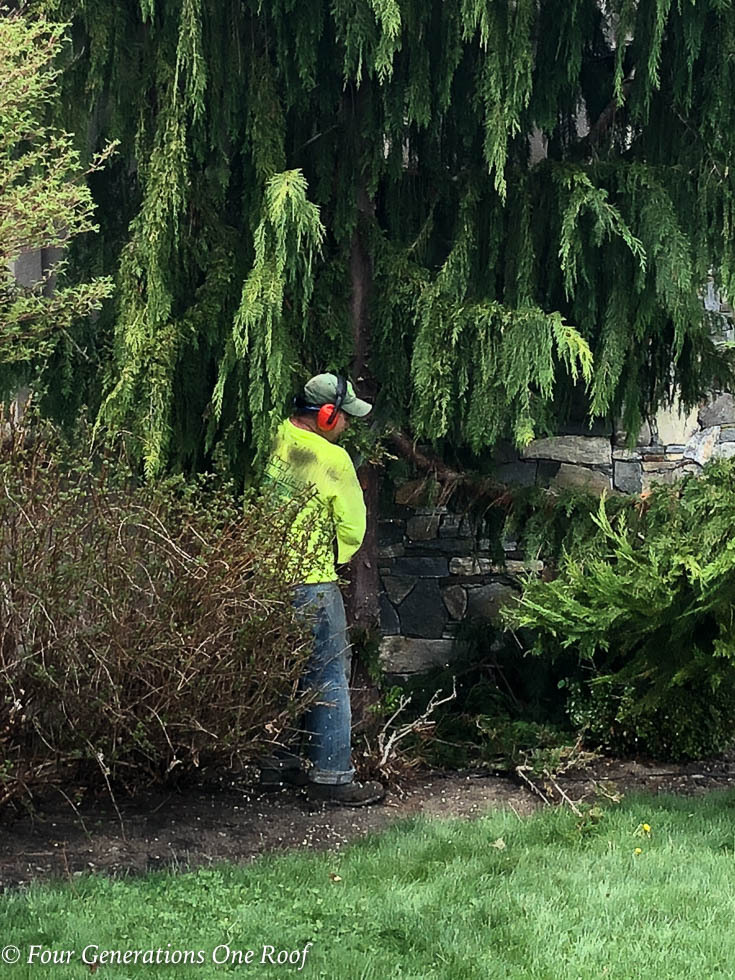Removing The Alaskan Cedar Tree in our Front Yard {before and after}