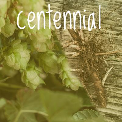 Centennial Hop 2018 Rhizome