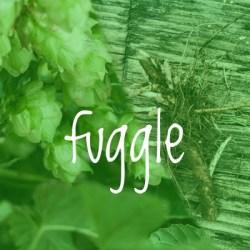 Fuggle Hop 2018 Rhizome