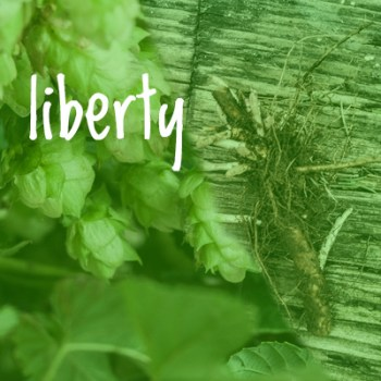 Liberty Hop 2018 Rhizome