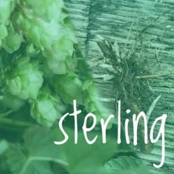 Sterling Hop 2018 Rhizome