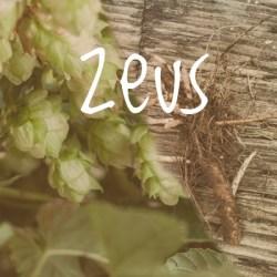 Zeus Hop 2018 Rhizome
