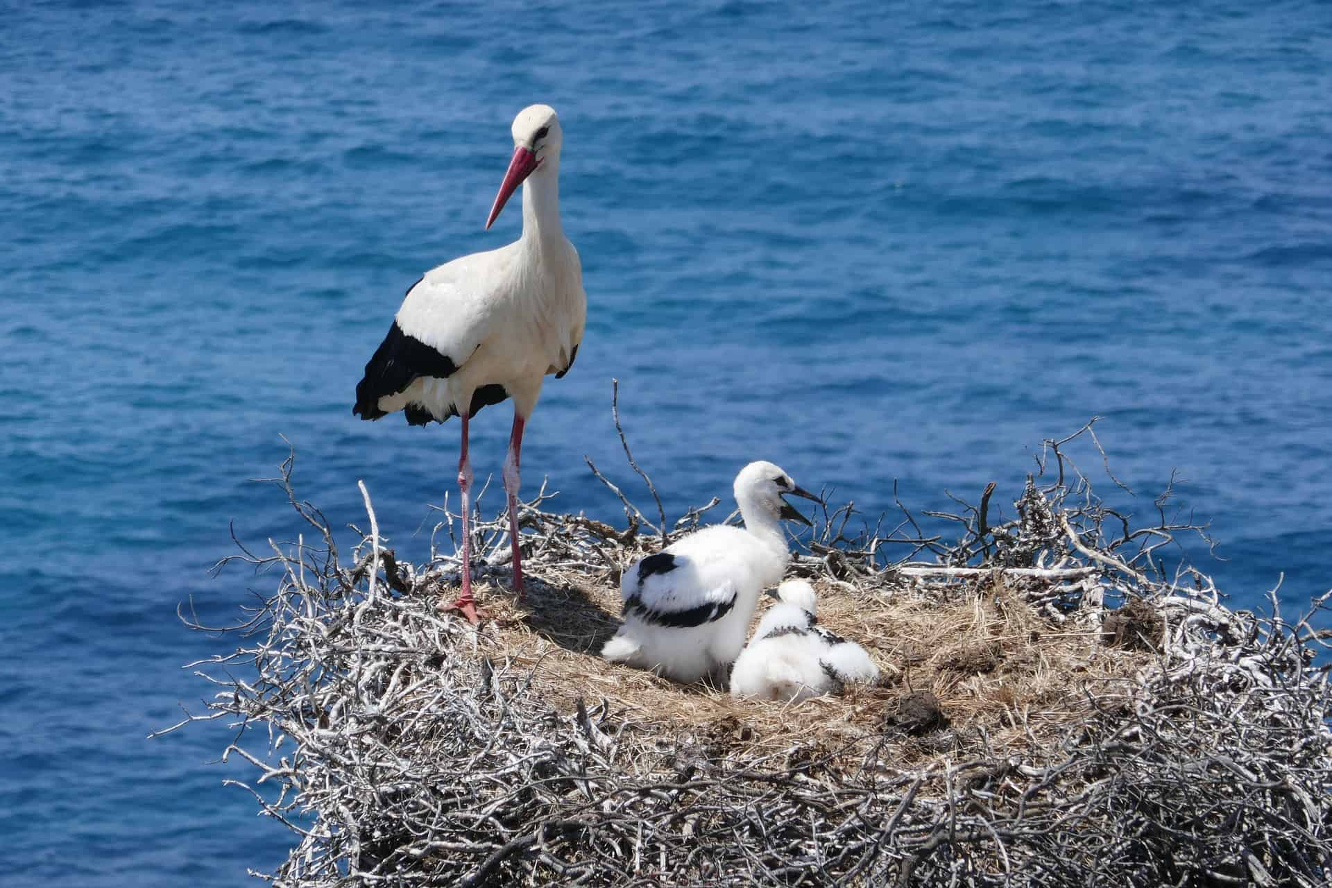 one of the cutest feature when you visit the Algarve in Winter - Storks! You see them everywhere! The Algarve region is an important stop over between the migration route between Europe and Africa