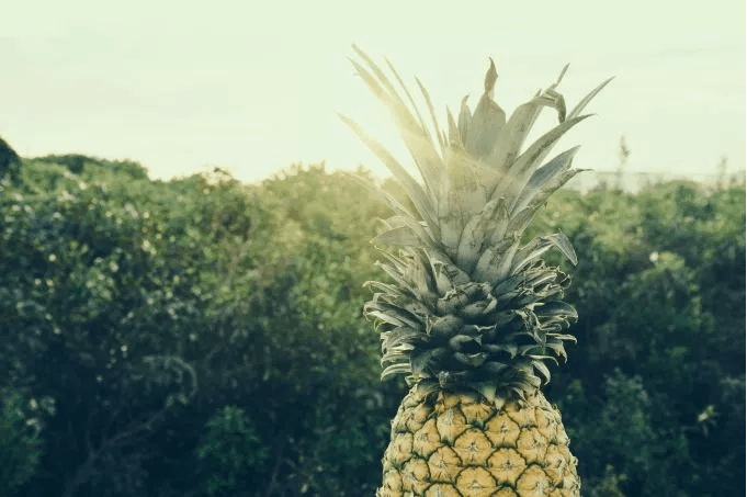 pineappleNature