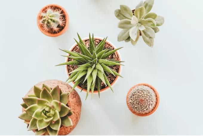succulentPlants