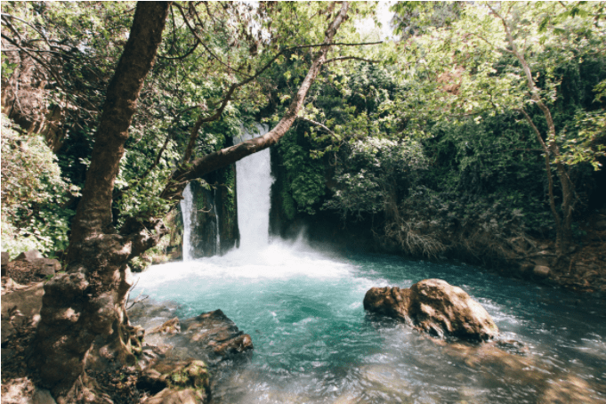 waterfallForest.PNG
