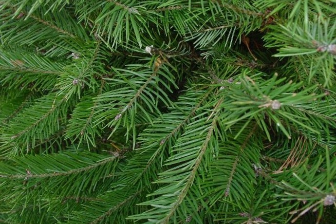 Christmas tree_-2237907698131055126