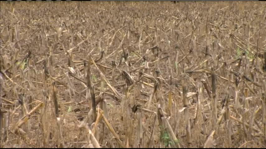 KS Corn and Wheat Crops_74240756