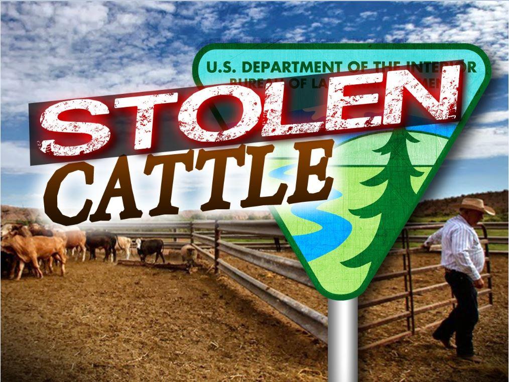 stolen cattle_1550867988366.JPG.jpg