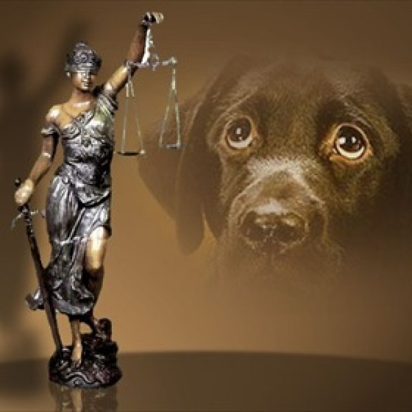 Animal Cruelty_8135889134170095719