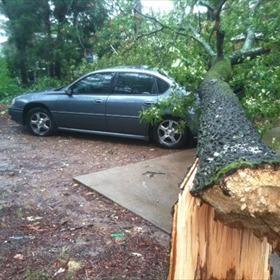 Tree onto Car_5503943631829617009