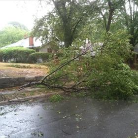 Tree falls on power line_1824618033164927884