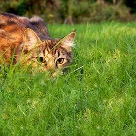 Cat_-8403040576301348088