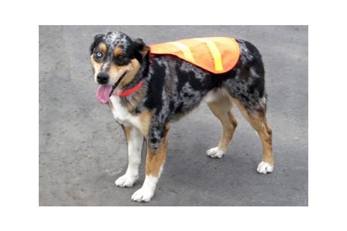 Shep, NLR Goose Patrol Dog_-5219078450304824955